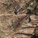 登山道(険しい)