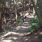 登山道(緩やか)