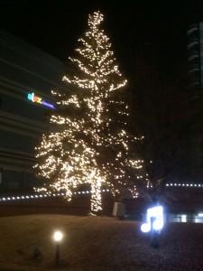 biwako_h_tree